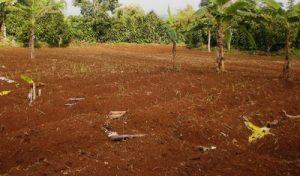 tanah kebun belakang rumah