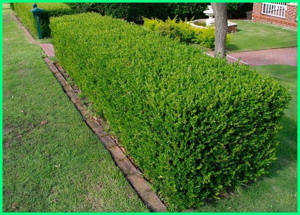 pohon sehat di kebun